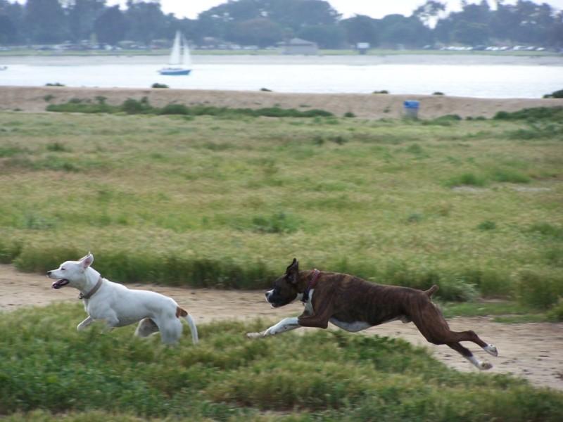 Fiesta-Island-dogs-1024x768.jpg